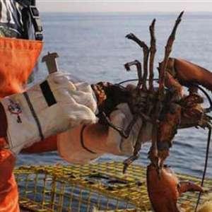Polda Lampung Gerebek Penampungan Benih Lobster, Nilainya Capai Rp 48 Miliar