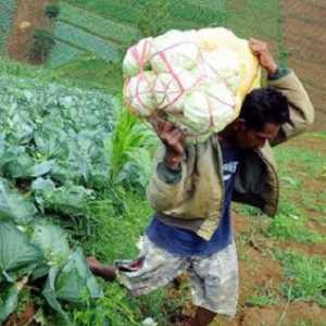 Bantah Wacana Impor, Kementan Pastikan Produksi Pertanian Melimpah Selama Masa Pandemik Covid-19