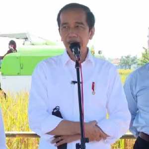 Tinjau Panen Padi Di Indramayu, Jokowi: Jumlah Dan Harga Gabah Sudah Bagus, Hanya Pupuk Sulit